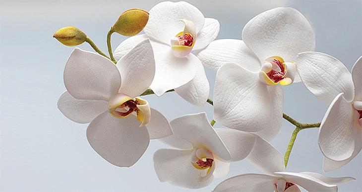 Белая орхидея фоамиран